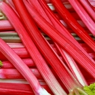 Rhubarb – nutritious natural food available at our farm shop